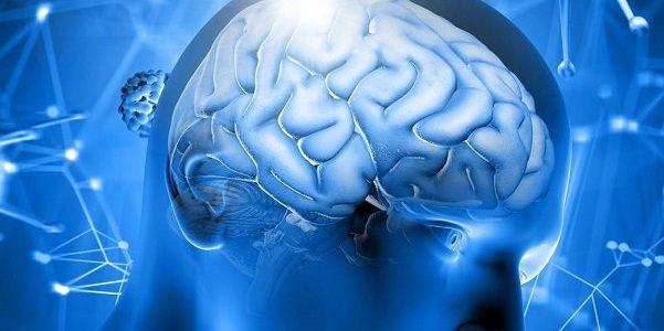 مغز و اخلاق