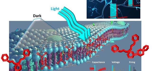 مداخله تکنولوژیک در فعالیت نورون ها